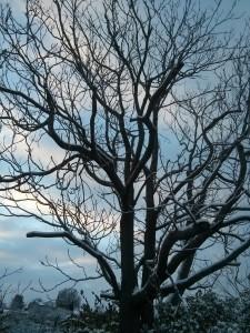 nov-snow-stark-tree