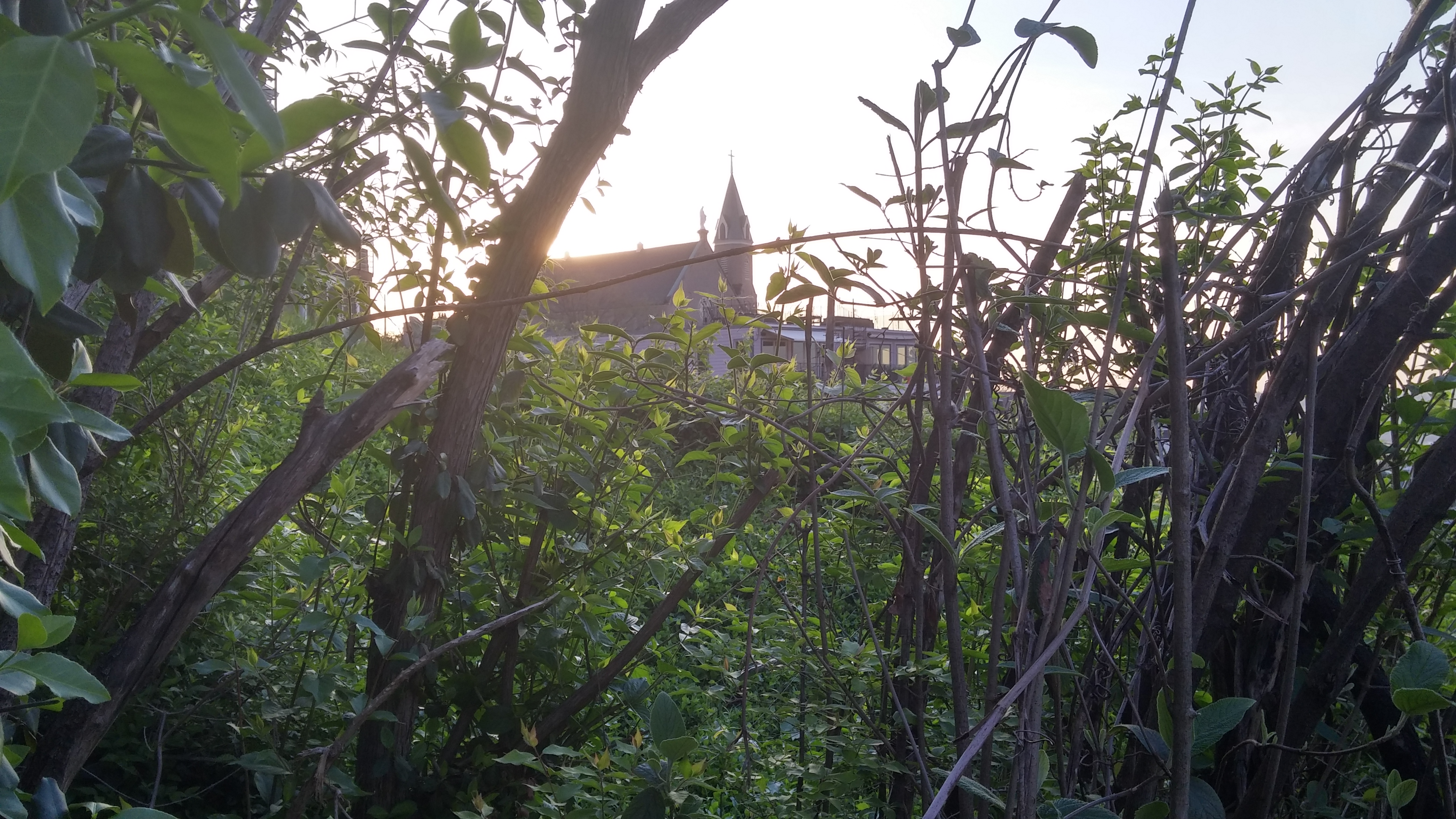 As one walks away from a prayerful morning, Holy Cross Immaculata Church in the distance. (Greg Hartman/CT Photo)