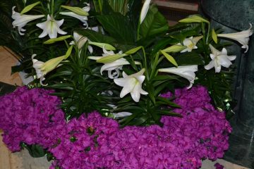Easter Lillies greeted the faithful as they entered the historic St. Peter in Chains Cathedral. (CT Photo/Greg Hartman)